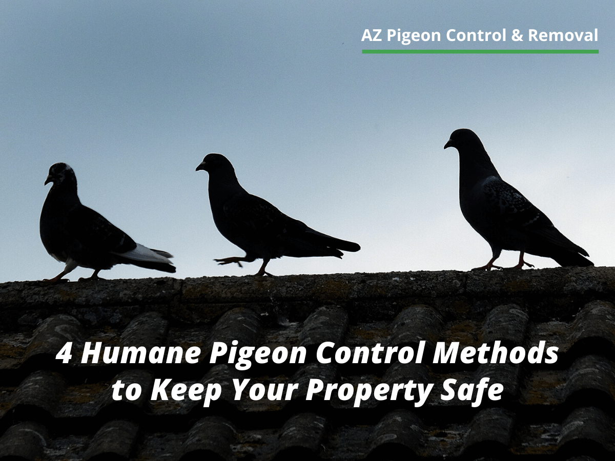4 Humane Pigeon Control Methods to Keep Your Property Safe