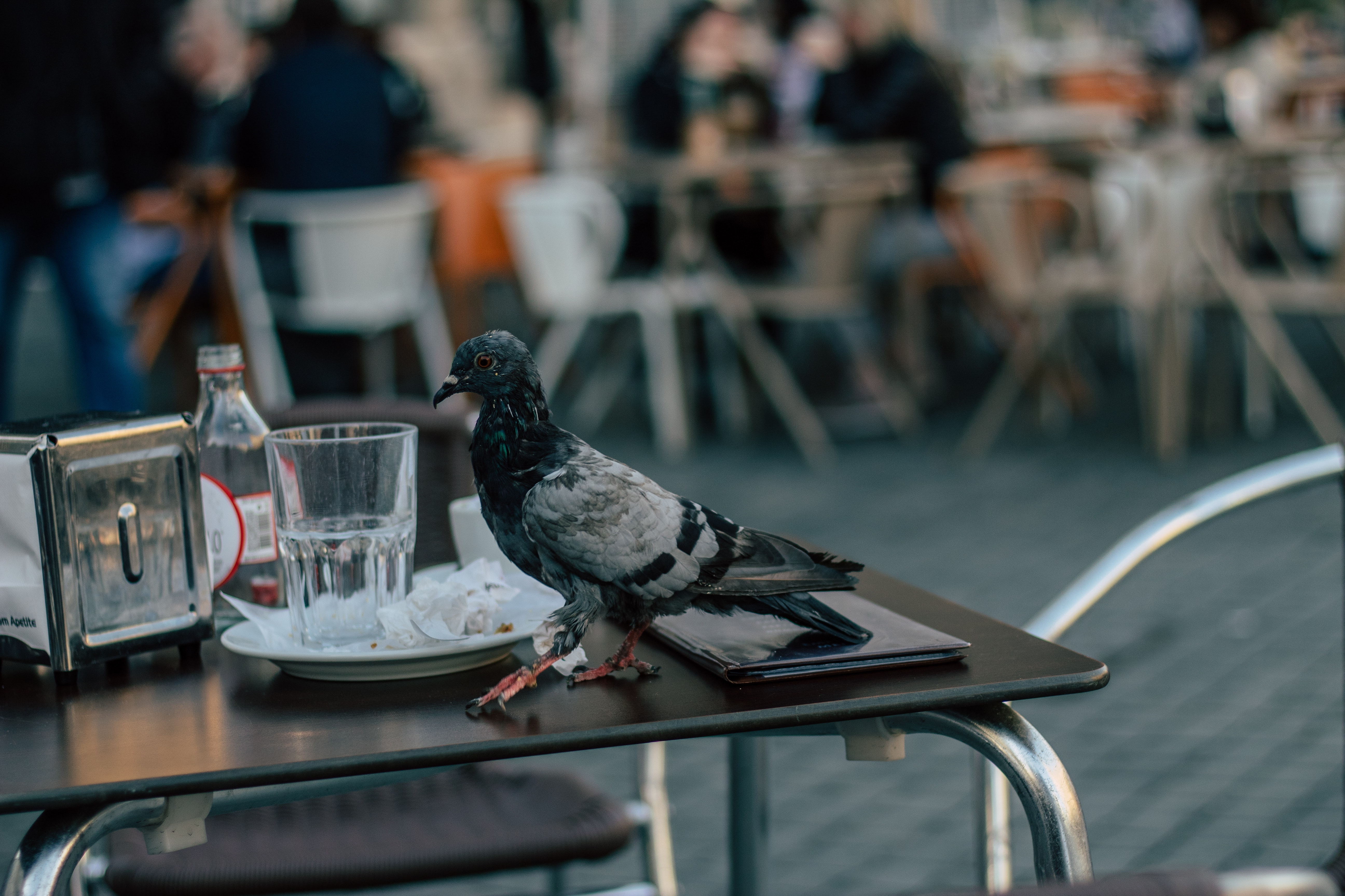 pigeon on outdoor table