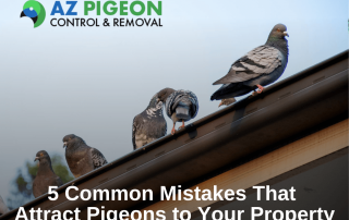 5 Common Mistakes That Attract Pigeons to Your Property