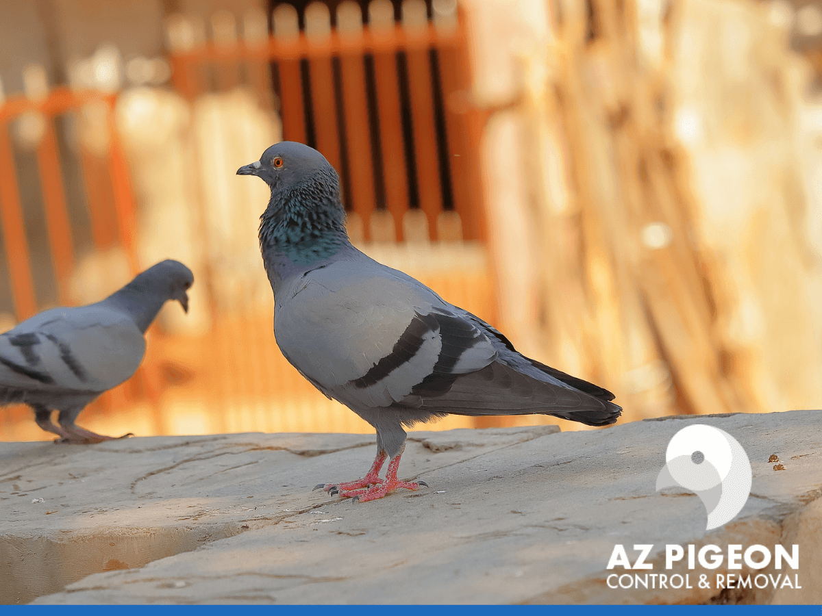 2 pigeons near a house
