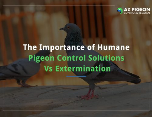The Importance of Humane Pigeon Control Solutions Vs Extermination