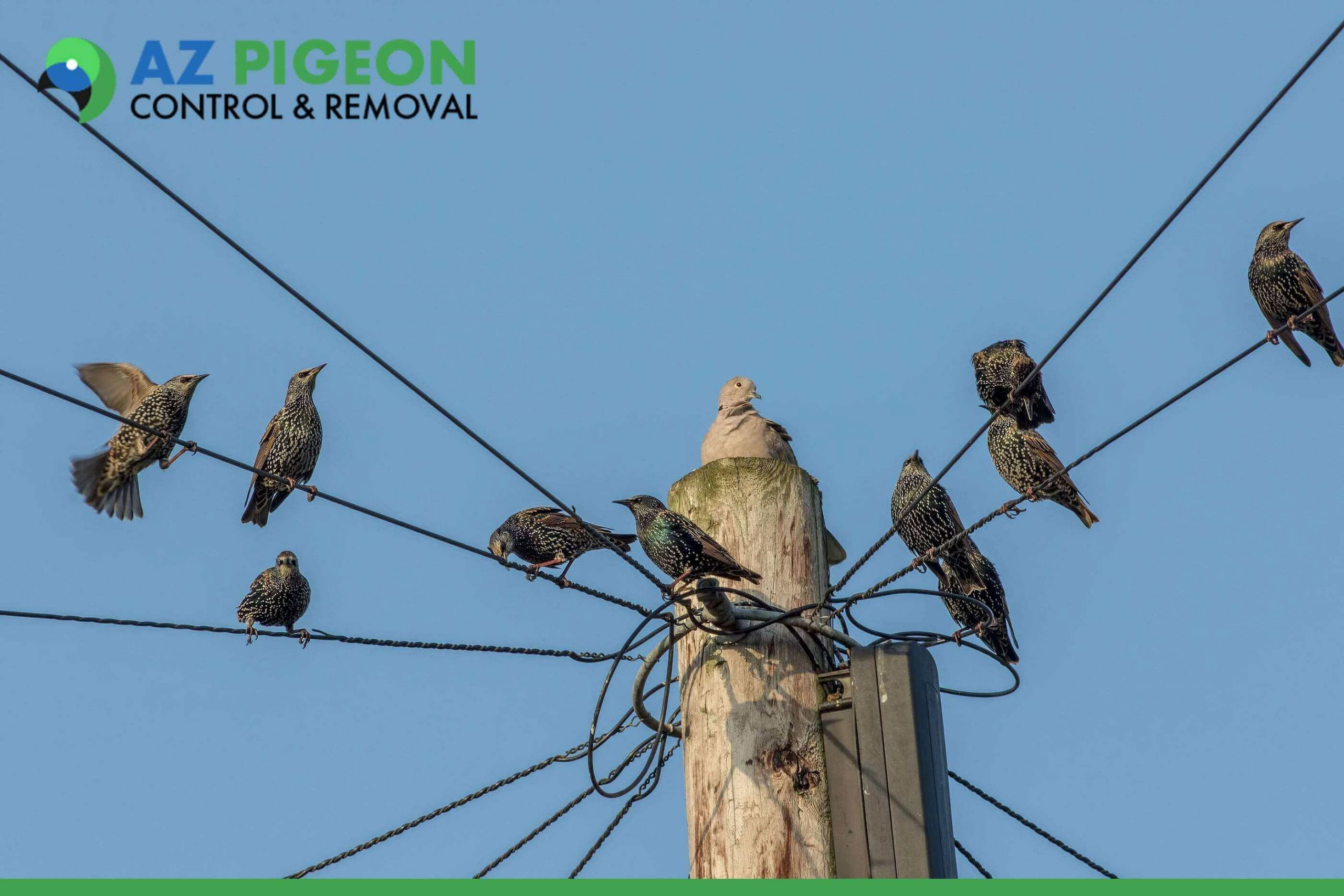 Critical Steps To Resolve Your Pigeon Pest