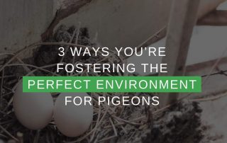 3 Ways You're Fostering The Perfect Environment For Pigeons