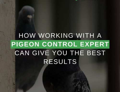 How Working With a Pigeon Control Expert Can Give You The Best Results
