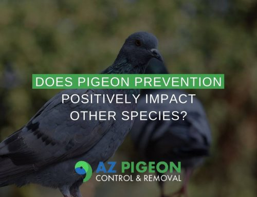 Does Pigeon Prevention Positively Impact Other Species?