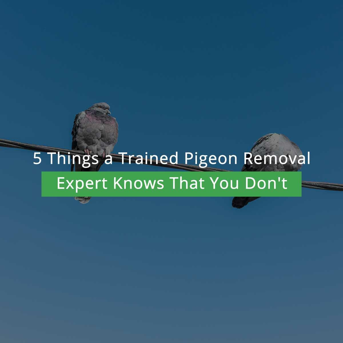 5 Things a Trained Pigeon Removal Expert Knows That You Don't